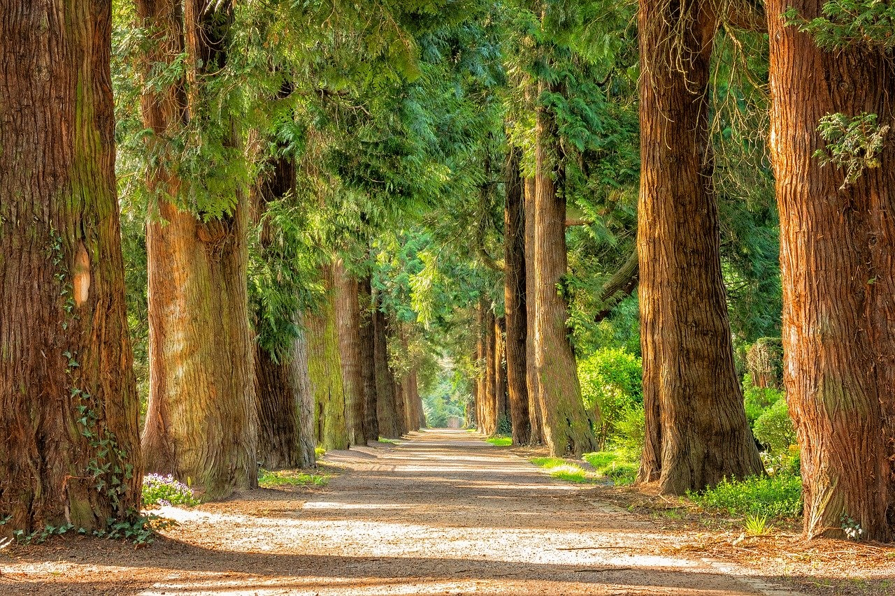 Tree Avenue by Peter H from Pixabay