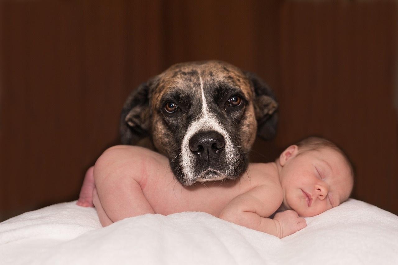 dog-1718242_1280by Karen Warfel from Pixabay